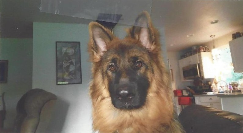 Sky is a German Shepard dog in Washington State, who had found a wonderful home.
